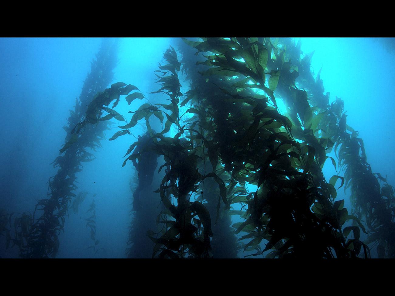 Wonders of the Sea 3D || The Film